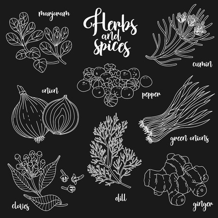 marjoram: Spices and herbs set to prepare delicious and healthy food. Contour botanical illustration on dark background with marjoram, onion, cloves, pepper, cumin, ginger, green onions, dill.