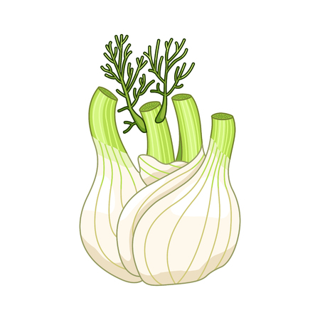 Fennel colored botanical illustration. Product to prepare delicious and healthy food. Isolated on white background.