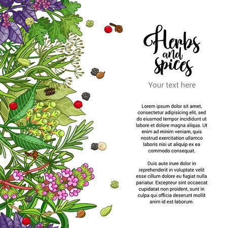 Vector carte à base de plantes conception avec des épices et des herbes. fond coloré décoratif avec la conception de type. frontière transparente avec modèle de texte