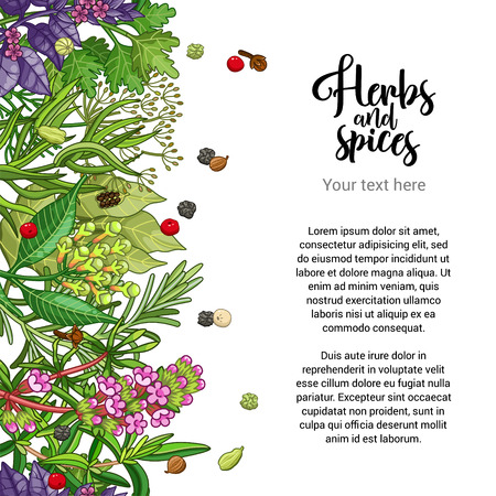 Vector herbal card design with spices and herbs. Decorative colorful background with type design. Seamless border with text template Ilustração