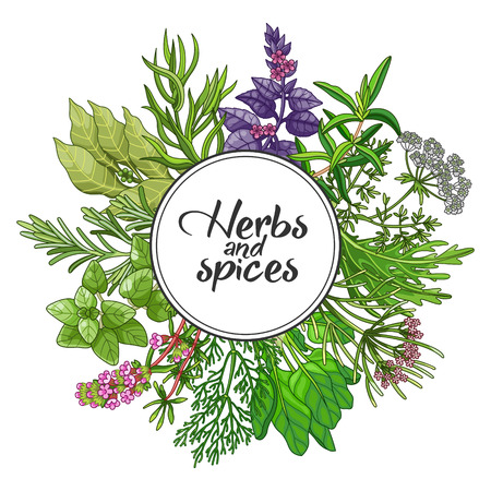 Vector round design with spices and herbs. Decorative colorful composition with type design