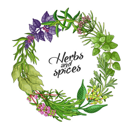condiments: Vector circle wreath template with spices and herbs. Decorative colorful composition with type design