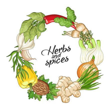Vector vegetable circle wreath template with spices and herbs. Decorative colorful composition with type design