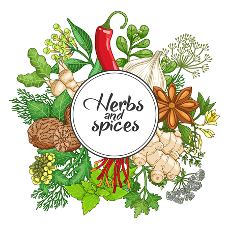 Vector hot round design with spices and herbs. Decorative colorful composition with type design Illustration