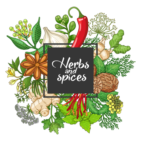 Vector hot square design with spices and herbs. Decorative colorful composition with type design Illustration