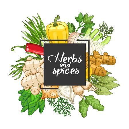 Vector quadratisches Gemüsedesign mit Gewürzen und Kräutern. Dekorative bunte Zusammensetzung mit Art Design