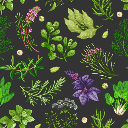 Vector greenery seamless pattern with spices and herbs. Decorative colorful composition on dark background
