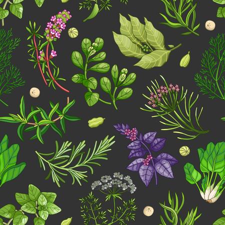 Wektor zieleni wzór z przyprawami i ziele. Dekoracyjny kolorowy skład na ciemnym tle Ilustracje wektorowe