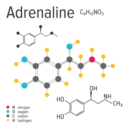 Chemische Formel, Struktur und Modell des Adrenalinmoleküls, Vektorillustration