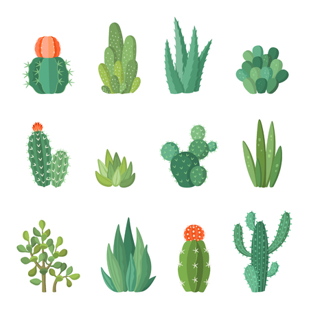 Cartoon colorful cactus and succulents cartoon vector set. Decirative flowers and plants. Isolated icons illustration