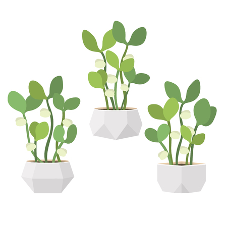 Young fresh green sprouts in white pots. New plant life. Flat vector illustration Ilustracja