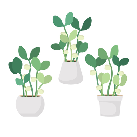 Young fresh green sprouts in white pots. New plant life. Flat vector illustration