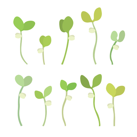 Young fresh single green sprouts. New plant life. Flat vector illustration