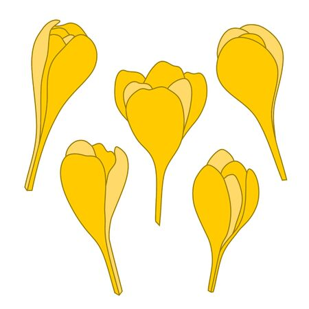 Yellow spring crocus flowers vector icon set. Isolated illustration on white background