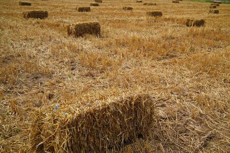 Fields of grain and bale on harvest Stock Photo