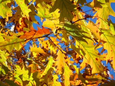 Golden autumn leaves on beautiful sun light Stock Photo