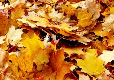 Golden podzimní listí