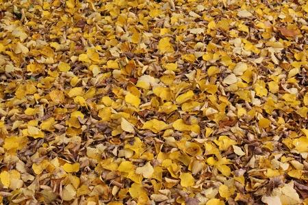 Golden autumn leaves pillow