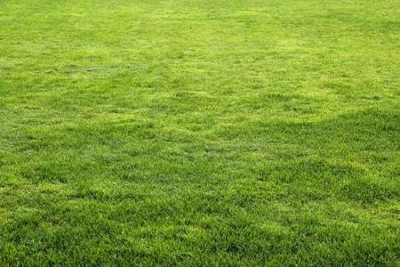 Green grass detail on sun