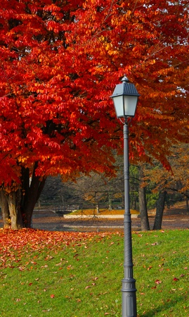 colourful images: A light, red tree and bridge in beautiful park Stock Photo