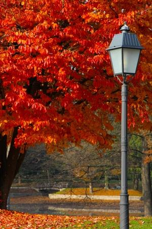 Pouliční světlo a strom s mostem za v parku