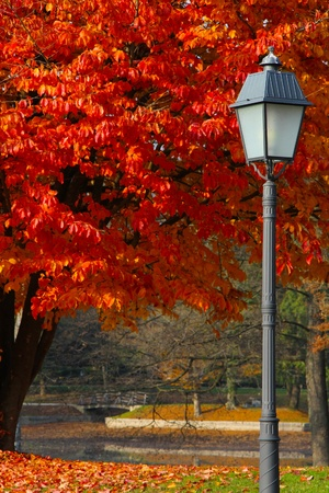 Straßenlaterne und ein Baum mit Brücke hinter sich in einem Park Lizenzfreie Bilder
