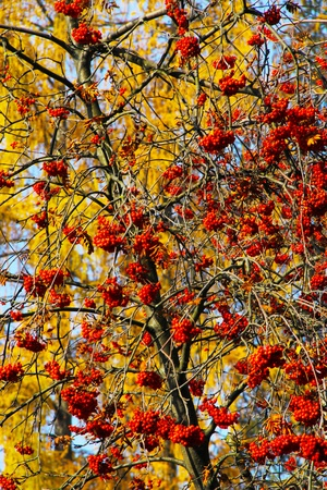 Beautiful seeds of autumn Stock Photo