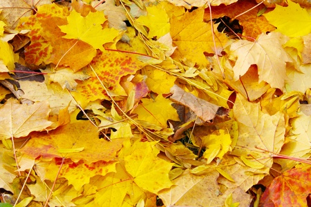 Autumn leaves on sunny day photo