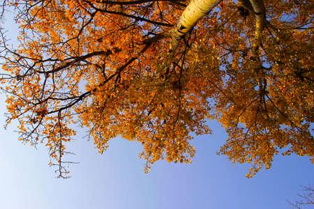 Autumn tree from ground.