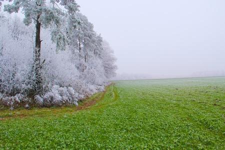 Early winter on forest near green fields dissolving into mist.