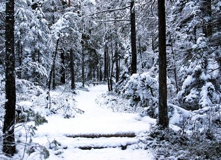 Cesta vede k lavičce v lese.