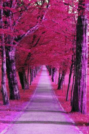 Designed purple park  Stock Photo