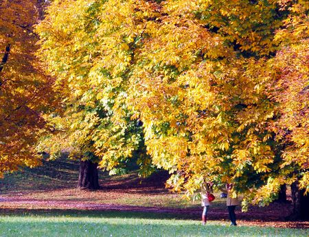 conversating: Woman are conversating under the yellow golden leaves on beautiful autumn day