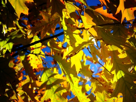 Beautiful autumn day with golden leaves Stock Photo - 13881499