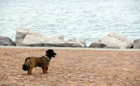 Lost young dog in the marina, by the sea Stock Photo - 13953182