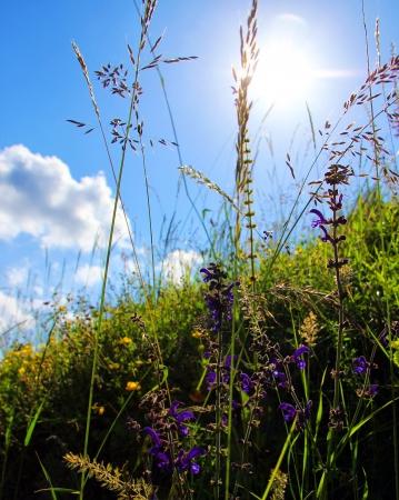 Beautiful grass and sun on meadow  photo