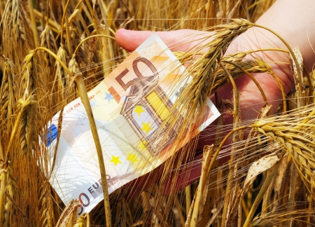 Paper money in the barley and a hand holding it  Stock Photo