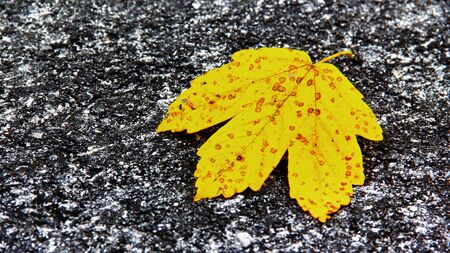 Yellow leaf in the asphalt. photo