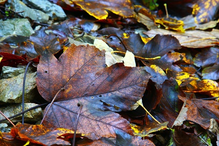 Autumn leaf on the ground among others