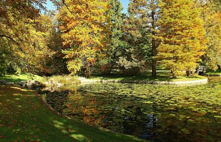 Small pond and autumn nature in the park