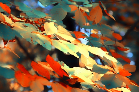 Autumn leaves for background