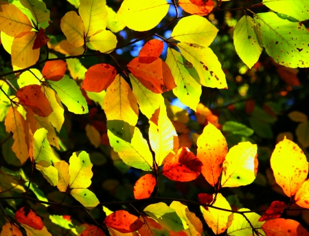 Autumn leaves for background  Stock Photo