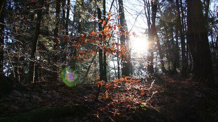 Sonnenstrahlen im Wald am kalten Wintertag Lizenzfreie Bilder