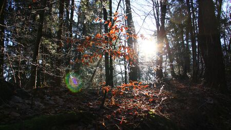 Sun beams in the forest on cold winter day