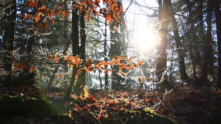 Sun beams in the forest Stock Photo - 17369732