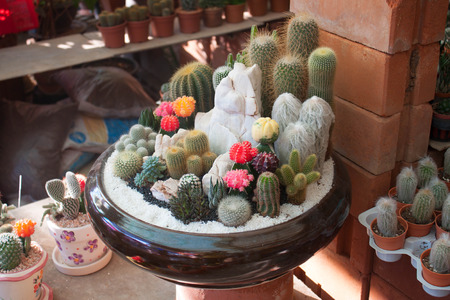cactus species: Many cactus species in the same pot