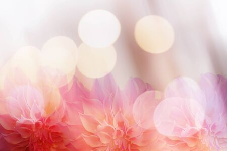 background designs: Pink flowers background bokeh