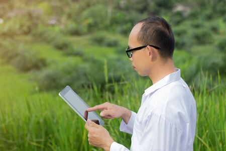 researcher is monitoring the quality of rice in the rice field
