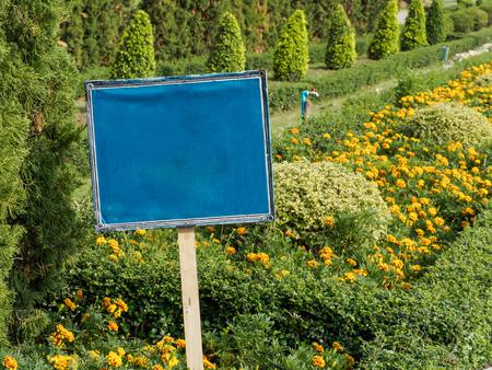 Blue Sign in the marigold line garden Stok Fotoğraf