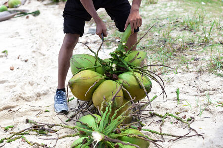 resident: Local resident with coconuts